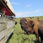 Highway 12 Scenic Byway Kreycik Elk and Buffalo Tours